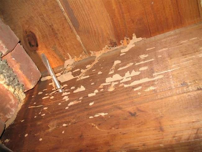Dấu hiệu gỗ bị mối mọt