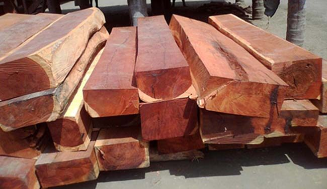 Gỗ gụ và gỗ giáng hương chống mối mọt