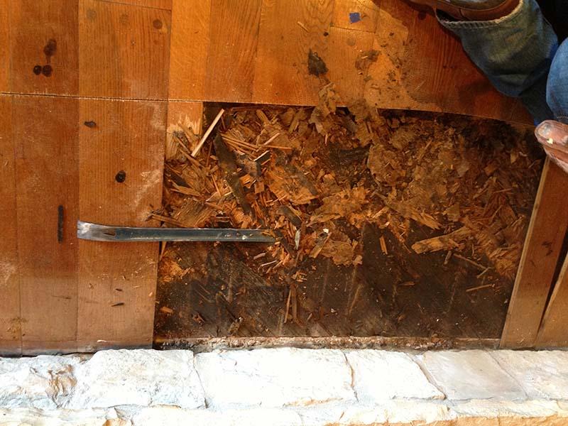 Sàn gỗ công nghiệp bị mối mọt xâm hại